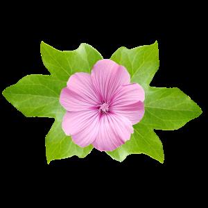 Efeu Blume