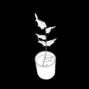 Schwarzweiss-Topfpflanze mit Schatten