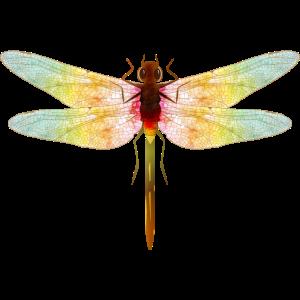 faszinierende irisierende Zeichnung einer Libelle