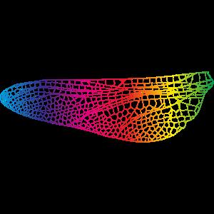 irisierende Linien eines Libellen Flügels