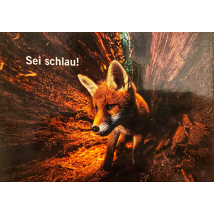 Fuchs sei schlau
