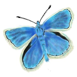 Blauer Schmetterling butterfly Airbrush Design