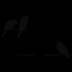 Vier Voegel Tshirt Voegel auf einem Draht