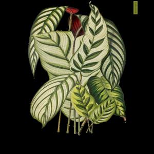 Botanischer Druck 1882