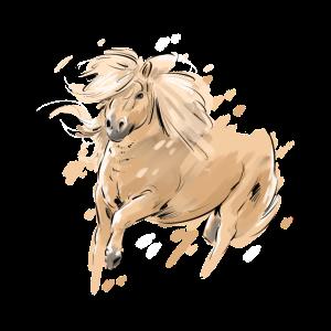 Shettland Pony Shetti Portrait
