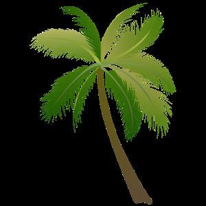 Palme Palmen 23052 S.