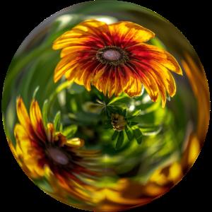 Blumenblase