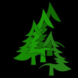 Tannenwald, Wald, Tannen