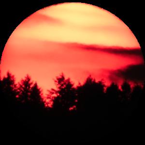 Sonnenuntergang Forest