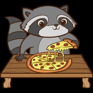 Ein süsser Waschbär isst eine Pizza.