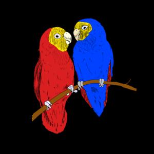 Papageien Paar Vogel Vögel Zoologie