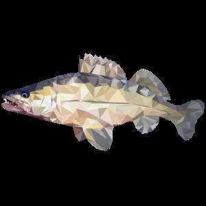 Zander Fisch Polygon