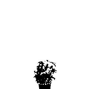 Basilikum - Basil Light and Dark Light Edition