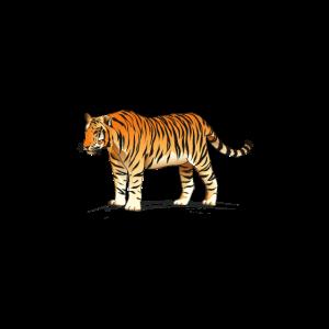erwachsener Tiger