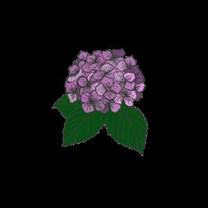Hortensie handgezeichnet - Geschenk Idee