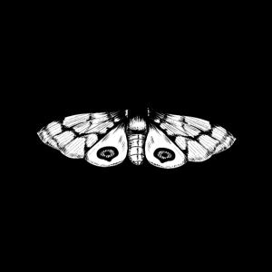 Motte schwarz weiß Insekt Nachtschwärmer