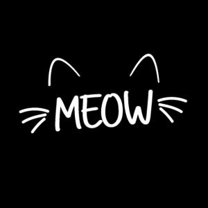 Katze Katzen Meow