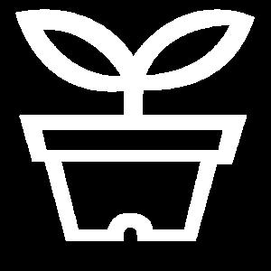 Blumentopf Pflanze