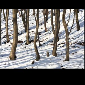 Den Wald vor lauter Baeumen Poster