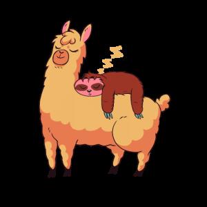 Lustiges chilliges Faultier schläft auf Lama