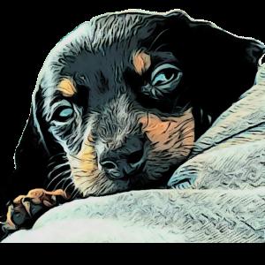 zarter Hund