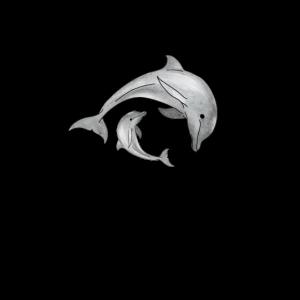 Delfine Meeresbewohner Meeresleben Meerestier