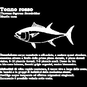 Blauflossenthunfisch