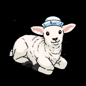Matrosen Schaf Nordisch norden Nordsee Schafe Moin