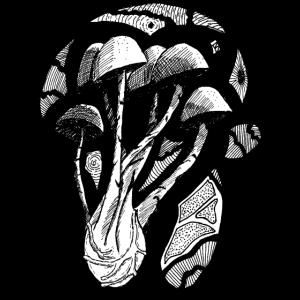 Pilze und Geometrie