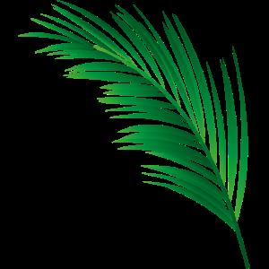 einzelnes grünes Palmenblatt