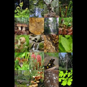 Impressionen zum Thema Wald