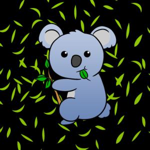 Koala Koalabär