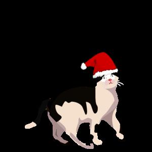 Katze- Weihnachtsmütze-Weihnachten
