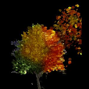 Baum in allen Jahreszeiten