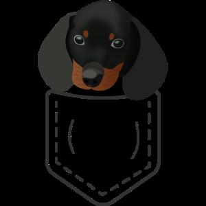 Niedlicher Süßer Hund Dackel in Brusttasche Welpe