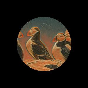 Papageientaucher