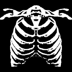 Brustkorb - Knochen