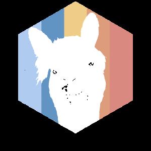 Lama Alpaka Alpaca