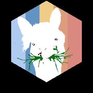 Lama Alpaka Alpaca Lamafell
