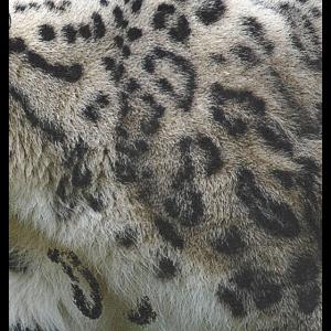 Fellmuster Schneeleopard, Raubkatze