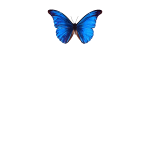 Blue Butterfly Aesthetic
