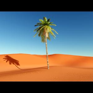 Palme in der Wüste