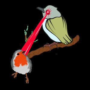 Vogel auf Zweig mit Laser Blick