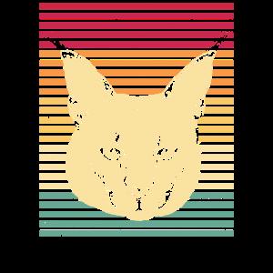 Luchs Luchse Lynx Katze Artenschutz