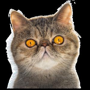 Lustiges Katzen T shirt Mieze Cat Geschenk