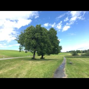 Bäume am Wanderweg