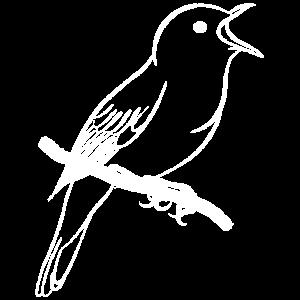 singende Nachtigall / singender Vogel