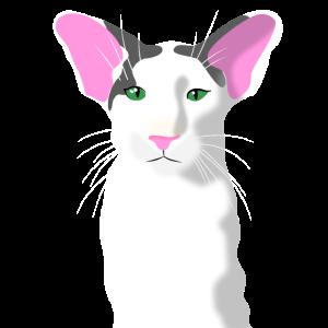 Orientalisch Kurzhaar Katze OKH