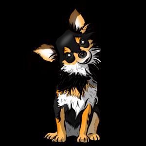 Chihuahua kleiner Hund