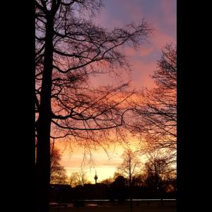 sonnenuntergang, düsseldorf,Baum,Rot,Abendrot
